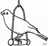 Canary Coloring Pages Bird Template Printable Drawing Supercoloring Animal Birds Popular Coloringhome sketch template