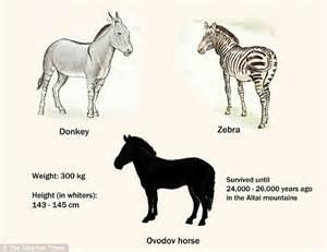 horse zebra donkey short found cross between siberian kg legged survived bones until known ago around years