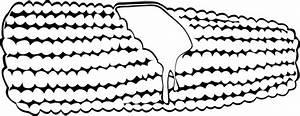Corn On The Cob (b And W) Clip Art at Clker.com - vector ...