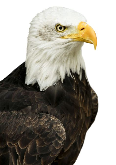 Eagle PNG Image - PurePNG | Free transparent CC0 PNG Image ...