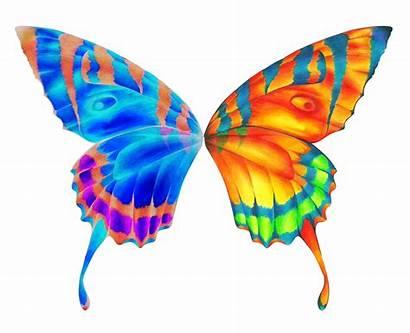 Butterfly Wings Clipart Wing Clip Cartoon Butterflies