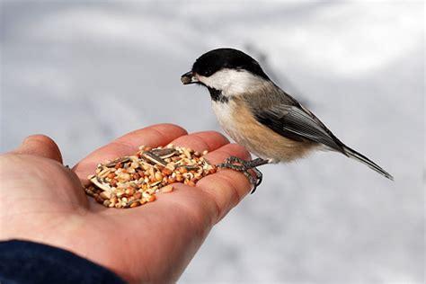 bird feeding   feed wild birds