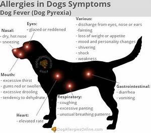 allergies in dogs symptoms dog fever dog pyrexia With dog food allergy symptoms
