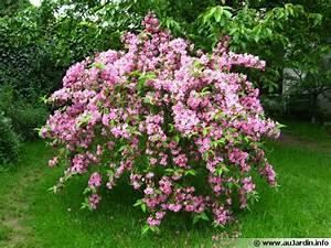 Arbre à Croissance Rapide Pour Ombre : weig lia weigela planter cultiver multiplier ~ Premium-room.com Idées de Décoration