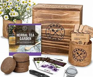 Buying Guide  These Starter Grow Kits Will Help You Find