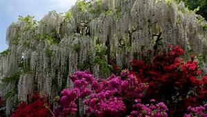 Japan, Park, Purple, Flower, And, Red, Flower, Wisteria, Hd, Garden