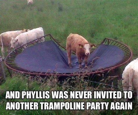 Funny Cow Memes - funny cow funny pictures quotes memes jokes