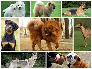 the 10 most expensive dog breeds in the world With expensive dog toys