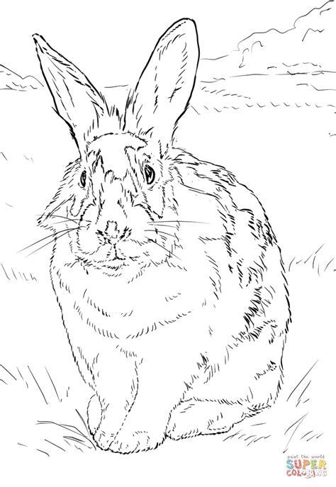 dibujo de conejo blanco  negro  colorear dibujos