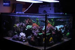 Le Led Aquarium Eau De Mer by Best Led Aquarium Light For Saltwater Tank France Orphek