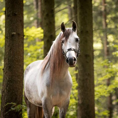 professionelle pferdefotografie fotoshooting pferd und