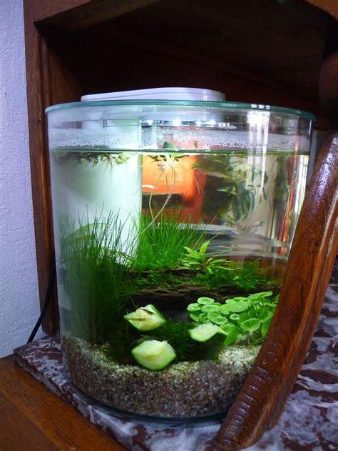 25 best ideas about crevette aquarium on