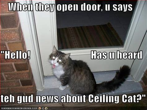Ceiling Cat Vs. Basement Cat