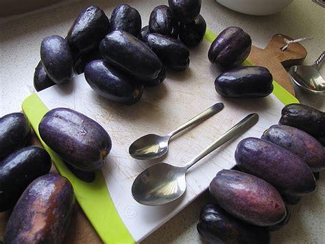 File:Dacryodes edulis, ripe fruit - nsafu, safoutier