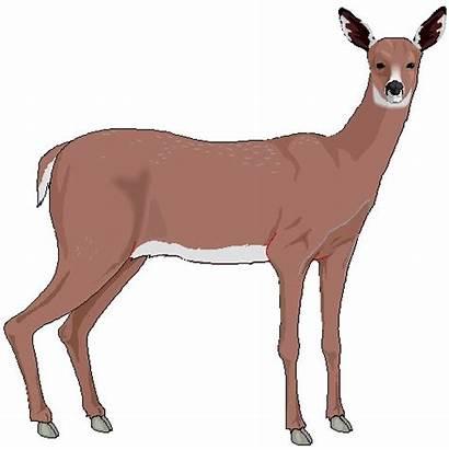 Deer Clip Clipart Svg Deers Clipartpanda Background