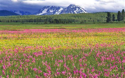 prato fiorito windows 7 sfondi hd natura per desktop prato fiorito sfondi hd gratis
