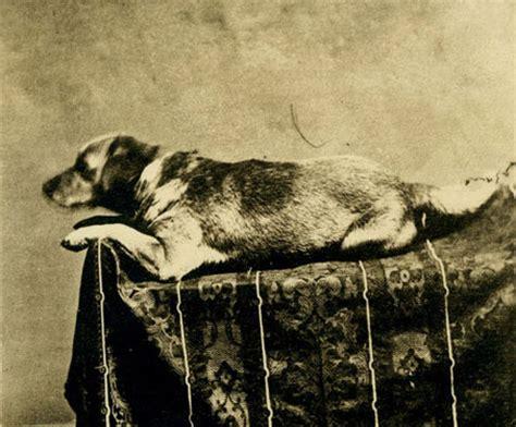 death  fido  lincoln family dog sangamonlink