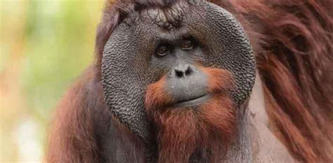 ugly animals  win hearts  dollars  save   extinction  malta independent