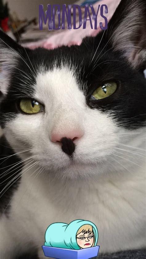 cat tuxedo cats names nosy named nine lives
