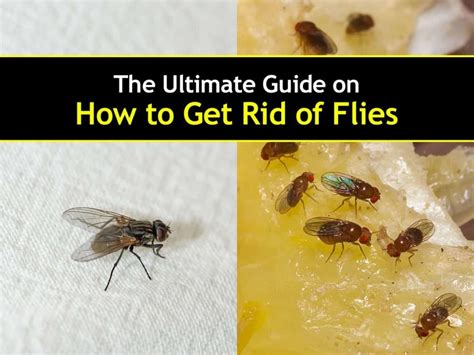 how to get rid of flies outside on patio how to get rid of flies in the house fast house plan 2017