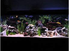 African Cichlid Tank Setup Guide AquariumStoreDepot