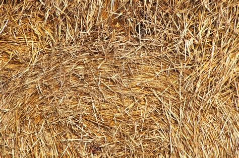 picture detail dry haystack pattern straw