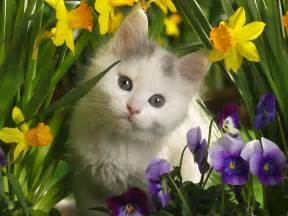 HD wallpapers beautiful cats pictures wallpapers