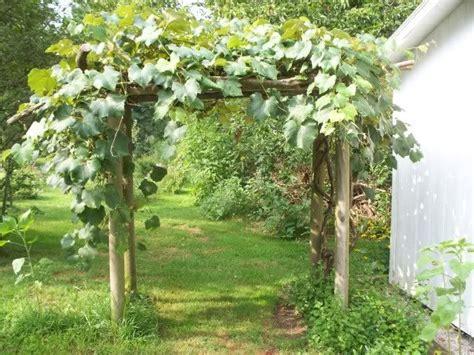a grape arbor grape arbor design idea around the yard pinterest