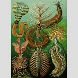 Aquatic Worm Drawing | 600 x 841 jpeg 579kB