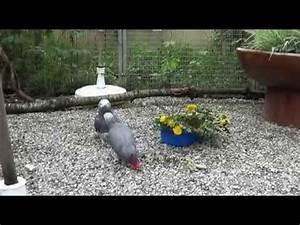 Hundehütten Zum Selberbauen : aufbau hundezwinger doovi ~ Michelbontemps.com Haus und Dekorationen
