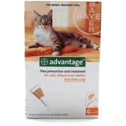 advantage flea for cats advantage cat flea treatment