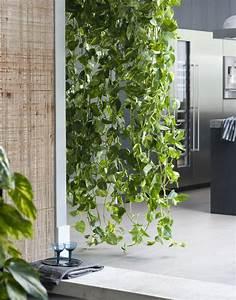 Plante Intérieur Grimpante : le scindapsus la plante grimpante des astronautes galerie photos d 39 article 8 9 ~ Louise-bijoux.com Idées de Décoration
