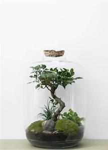 Acheter Terrarium Plante : forest xl green factory atelier green factory ~ Teatrodelosmanantiales.com Idées de Décoration
