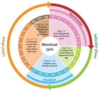 woman pregnant days period