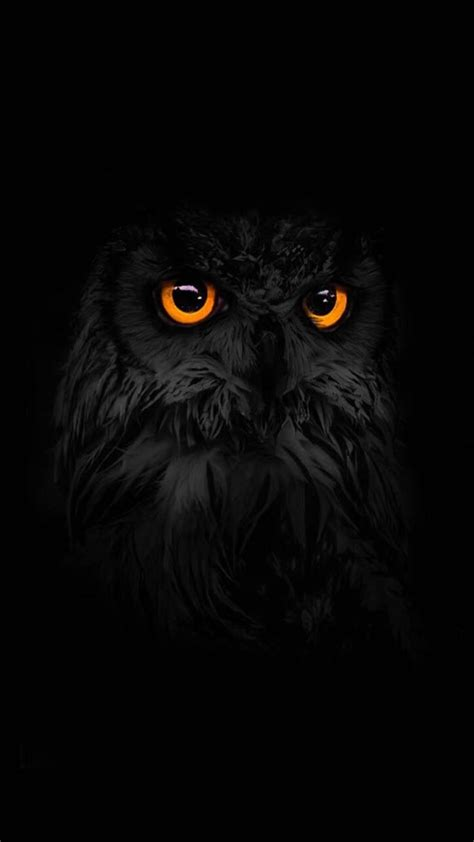 Owl Phone Wallpaper by 22 Best Phone Wallpapers Images On Cellphone