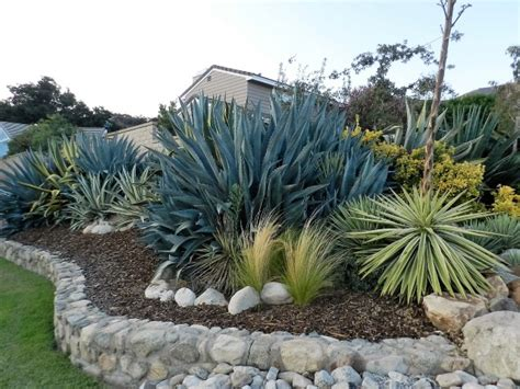 agave tree and landscape plant an agave landscape