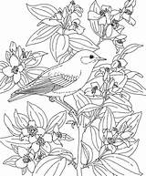 Coloring Pages Flower Hawaiian Hawaii Drawing Printable Flowers State Bird Turtle Luau Sea Adult Sheets Birds Idaho Reference Azcoloring Popular sketch template