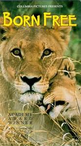 Borne Free Lyon : the lion world news the guardian ~ Medecine-chirurgie-esthetiques.com Avis de Voitures