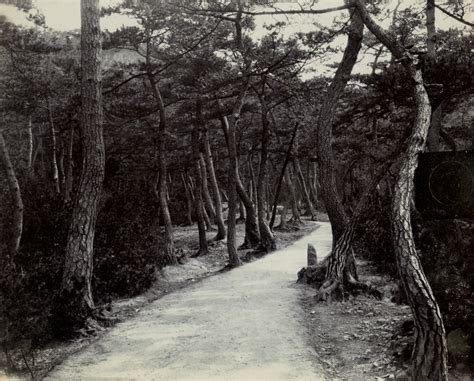 road lined  trees frank lloyd wright  japan