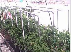 Low Cost PVC Pipe Tomato Cage & Gardening in Las Vegas
