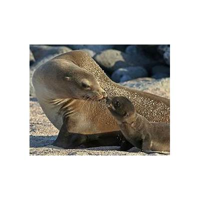 Sea lions massacred in Galapagos Islands