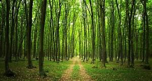Foret à Bois : la for t un placement s curisant dans le temps ~ Nature-et-papiers.com Idées de Décoration