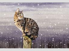 Kostenloses Foto Katze, Schnee, Winter, Hauskatze
