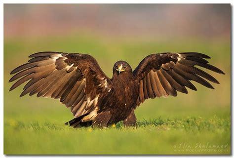 Bird Wings Eagles Spread