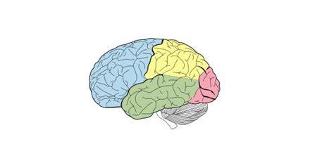 Brain diagram no labels ccuart Image collections