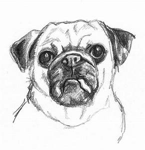 Best 25+ Drawings of dogs ideas on Pinterest | Sketches of ...