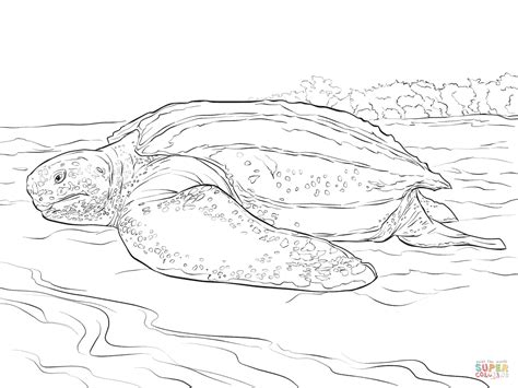 Realistic Leatherback Turtle Coloring Page Free