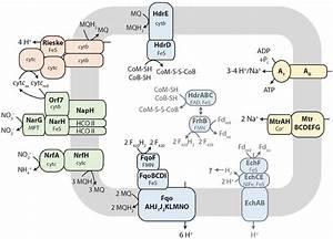 Tentative Metabolic Pathway Model Of Membrane