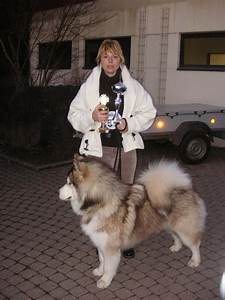 Images For > Alaskan Malamute Size Comparison
