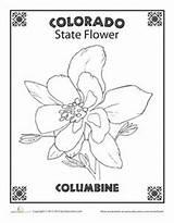 Columbine Rocky Coloring Mountain State Flower Colorado Printable Worksheets Cdr Docx Tutorial Pdf Studies Social Komentar Belum Ada Untuk National sketch template